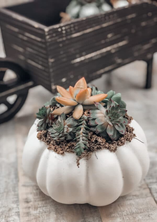 A DIY Pumpkin Succulents Centerpiece