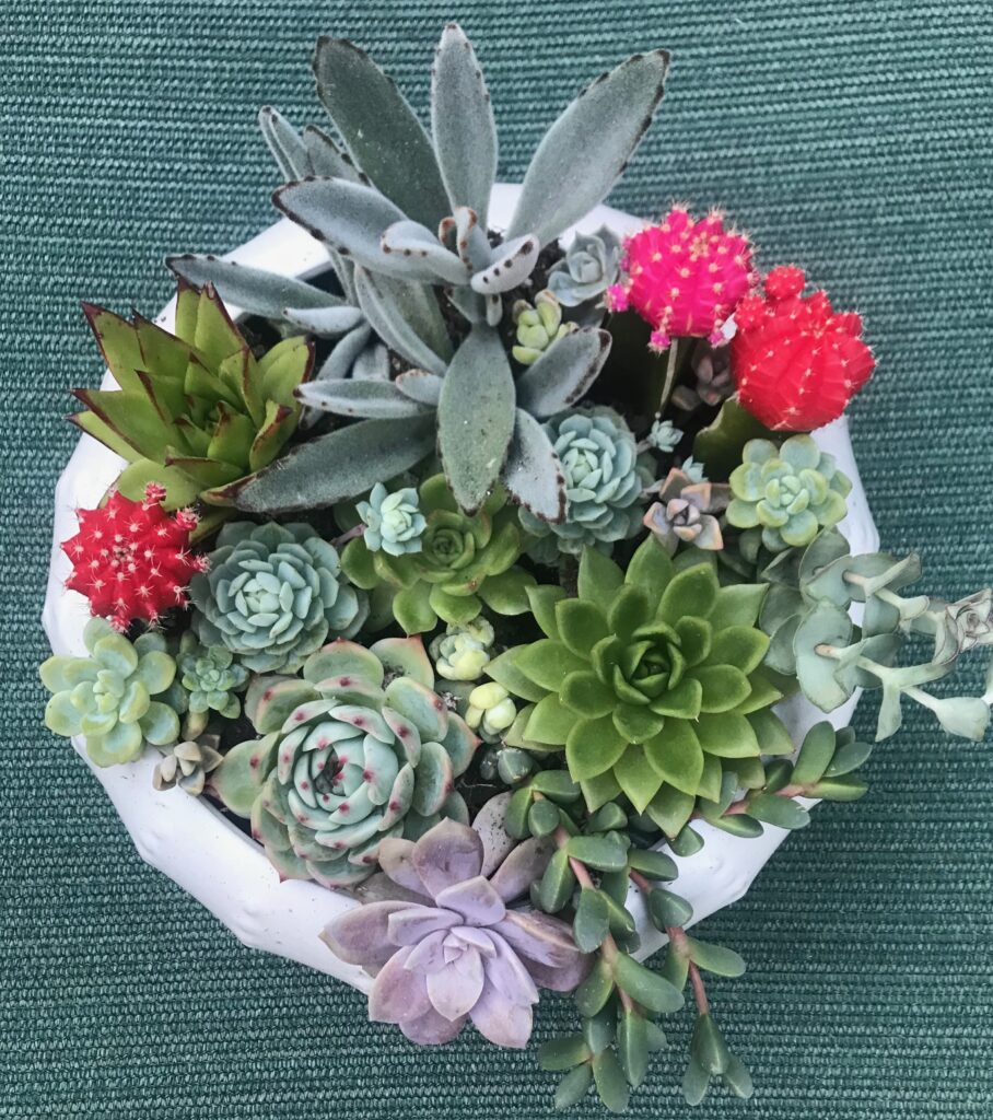 How to Plant Succulents to make a beautiful arrangement!