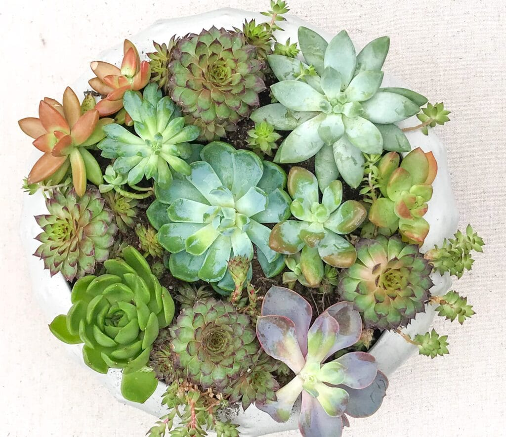 Learn how much sunlight succulents actually need to look their best!