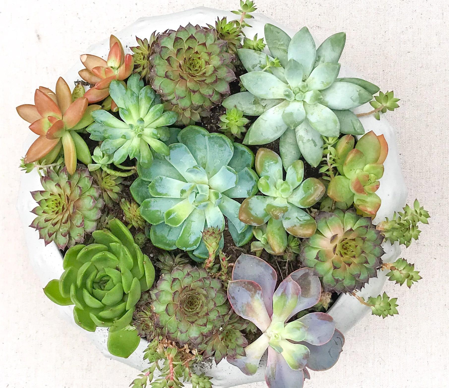 How to Plant Succulents for a Beautiful Arrangement