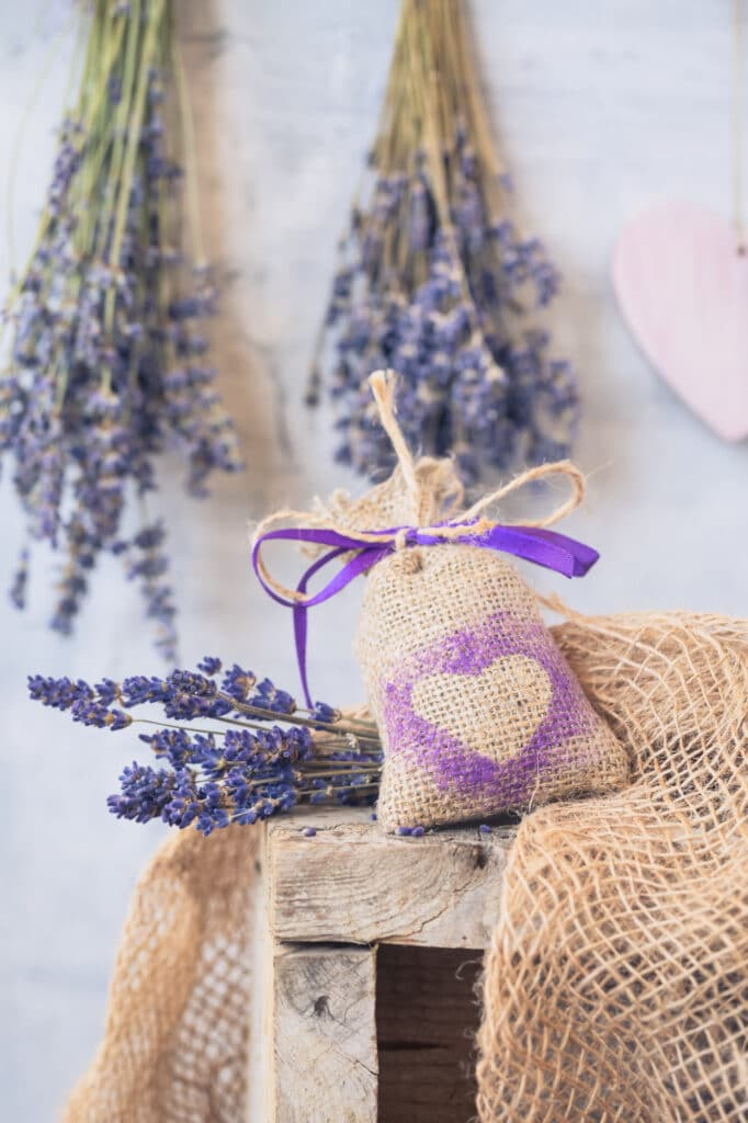 Learn how to care for lavender!