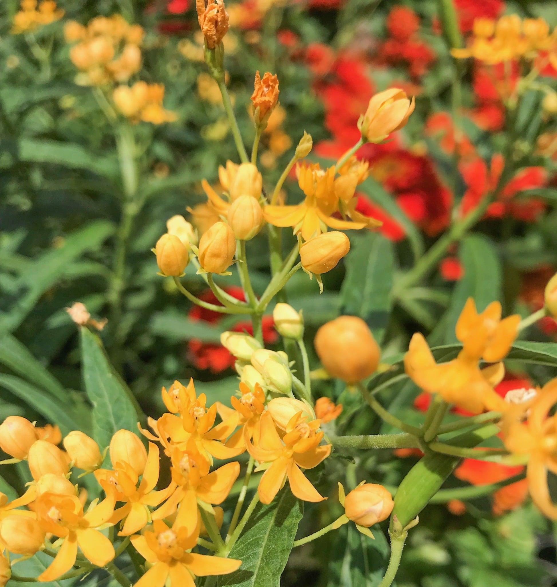 Best Perennials for a Drought-Tolerant Garden