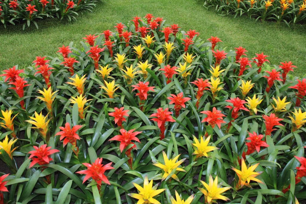 Learn how to care for bromeliads!
